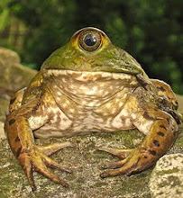 he Frog