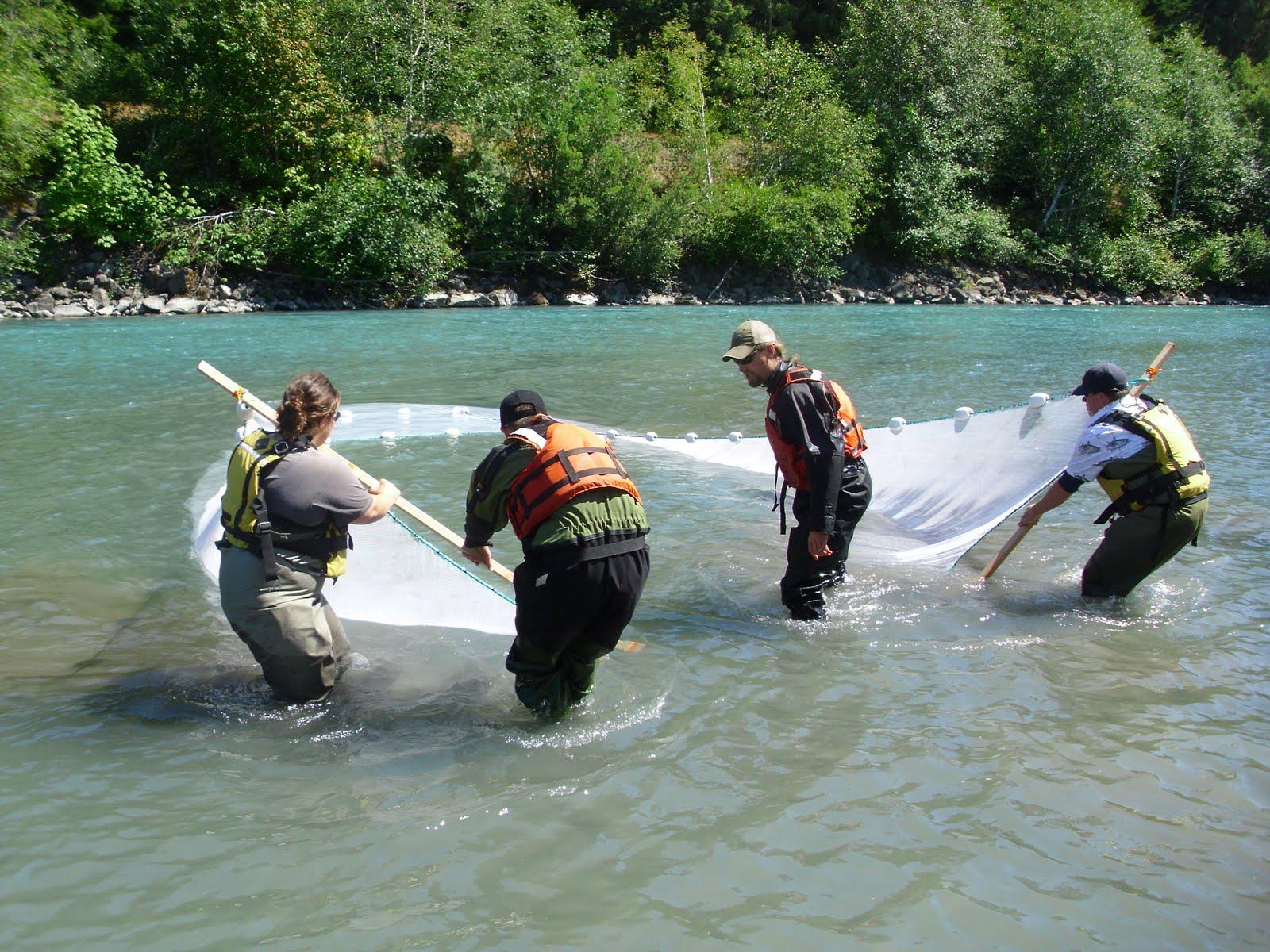 The fish files my life aquatic part 3 for Hoh river fishing