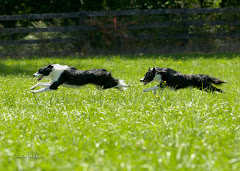 Spot & Coal Running in Field