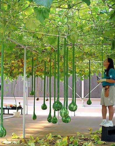 Home Garden Hydroponics Gardening