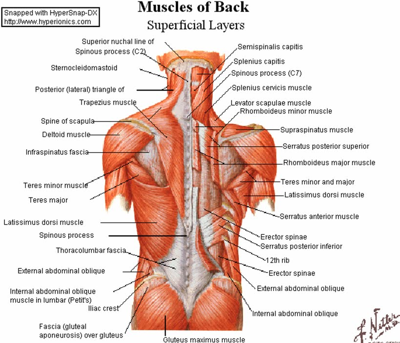 Referral pain and trigger point