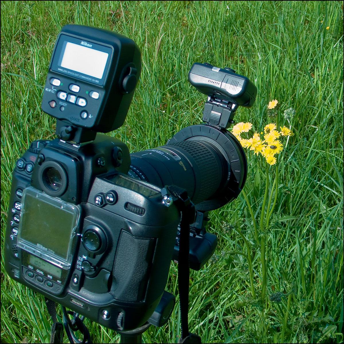 macrofotografia