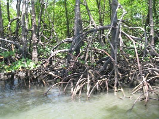 Depois de 7 km de praia privativa,uma lagoa com agua cristalina, temos também um manguezal