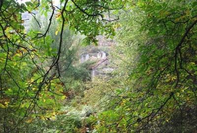 Δάσος γνωστό και σαν μεγάλο δάσος ένα