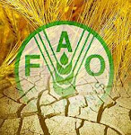 LA FAO EN ESPAÑOL