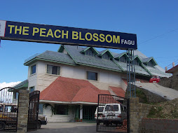 """The Peach Blossom"" and it's ""buds and blossoms"""