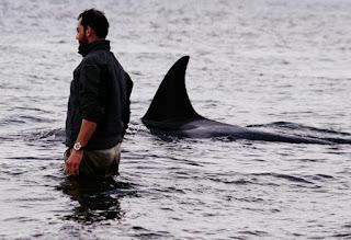 Beto Bubas orcas