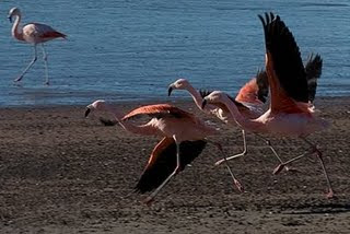 Flamingos in the worlds end land Patagonia