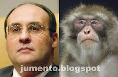 Ó Vitinho tu és macaco!!!