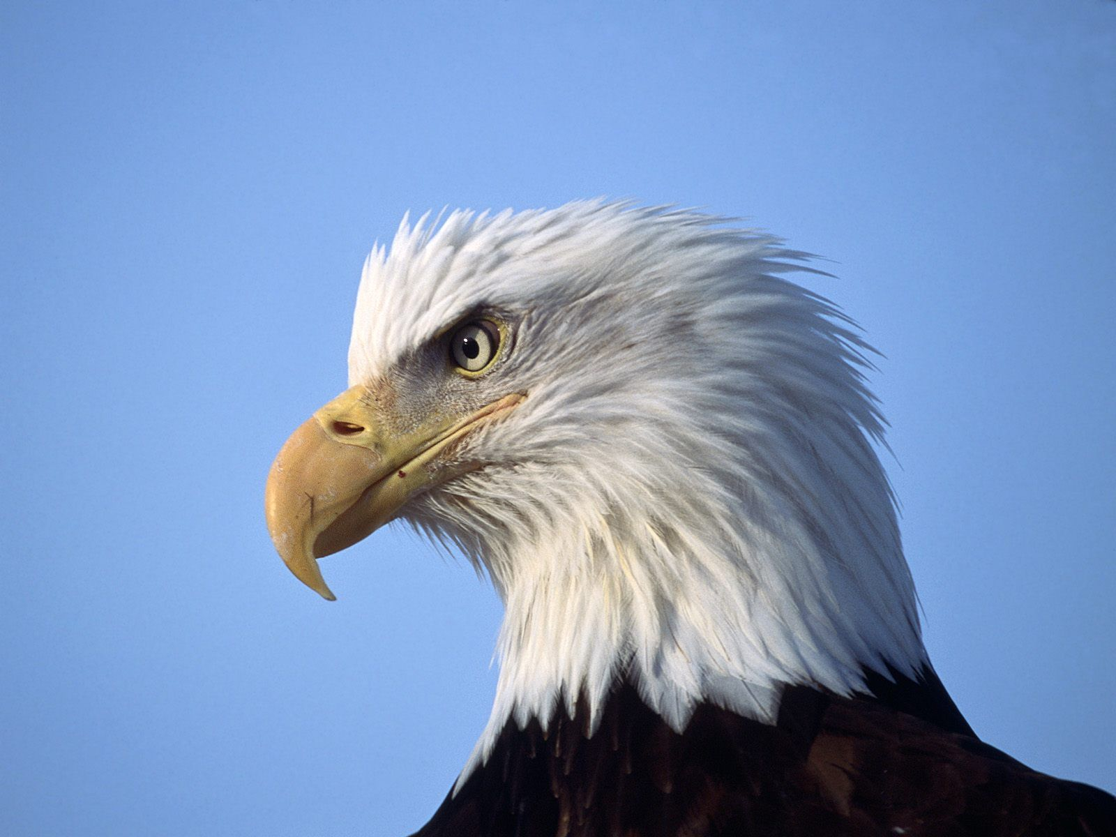 Tiptop 3d Hd Wallpapers Collection Eagle Wallpapers