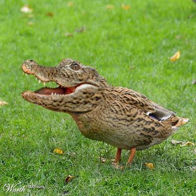 http://3.bp.blogspot.com/_Bw0XlvSSOEU/RkQmRFpQsnI/AAAAAAAAAAU/Qxu7_Gheor8/s400/crocoduck.jpg