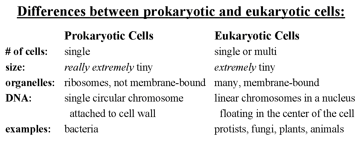 Homeschoolers Resources September 2010 – Prokaryotic and Eukaryotic Cells Worksheet