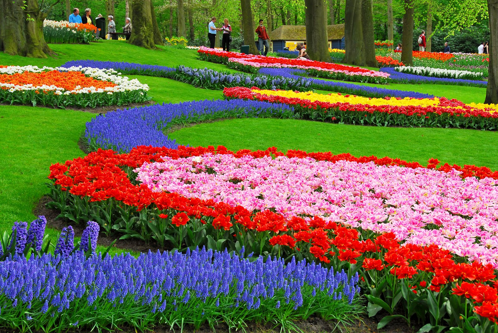Keukenhof holland s most beautiful flower garden for Most beautiful garden flowers