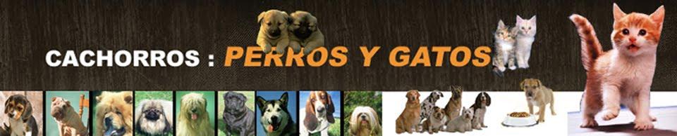 Cachorros: Perros y Gatos