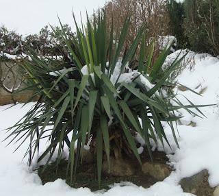 neige plante exotique