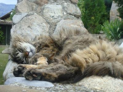 chat qui dort