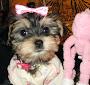 Puppy A