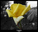 Rosa amarilla de la amistad