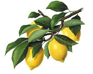 Trucos Caseros con el Limón Limoncello%5B1%5D