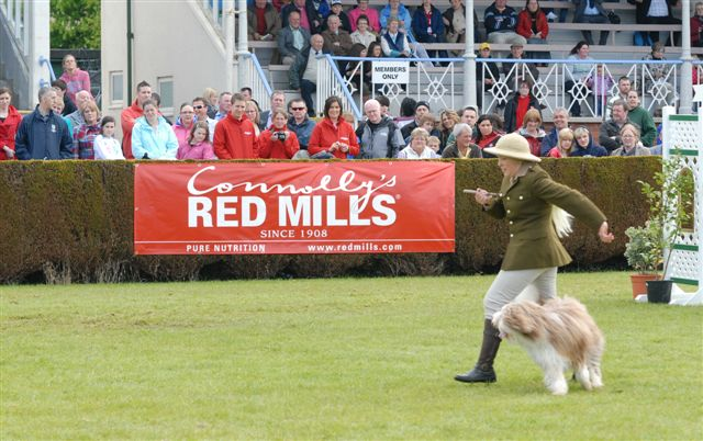 top lodge dancing dogs the top lodge final day at