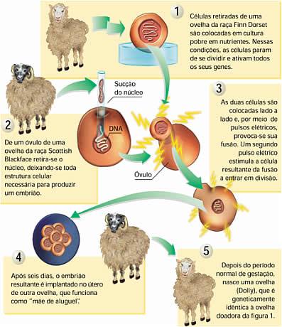 celula vegetal e animal. celula vegetal e animal.