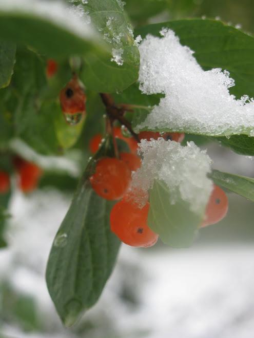 Hösten i Norrland