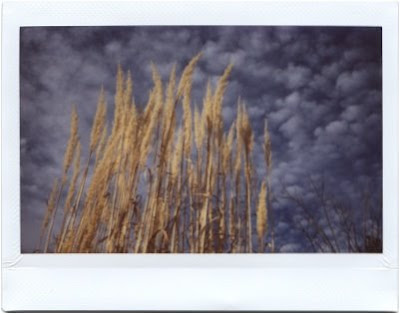 Wheat Sky - Instax Photograph by Joe Beine