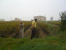 Vineyards of the Beaujolais