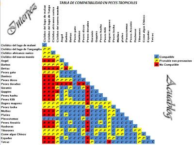 Acuablog compatibilidad en peces tropicales for Temperatura para peces tropicales acuario