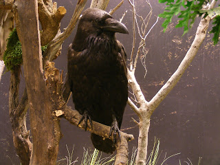 Mr.Crow