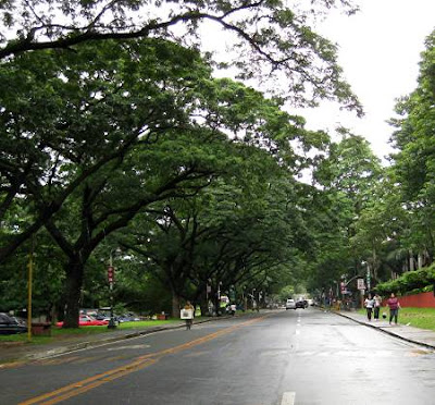 Roxas Avenue, University of the Philippines - Diliman