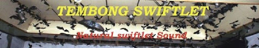 Tembong Swiftlet