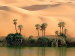 OASE SAHARA