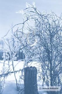 photo d'un paysage d'hiver, arbre sec et cloture dans la neige