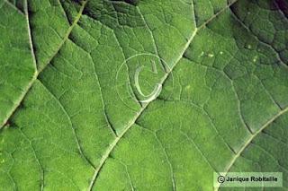 photo nature texture feuille verte
