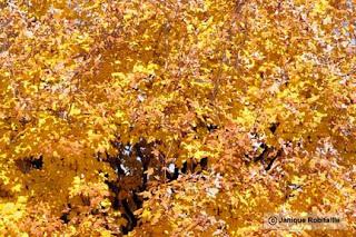 photo arbre en automne feuilles jaunes