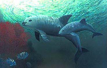 Vaquita Underwater