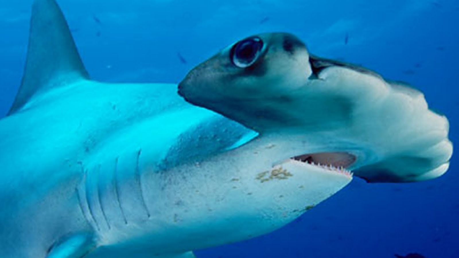 Rtsea blog observations on oceans sharks and nature for Are sharks fish