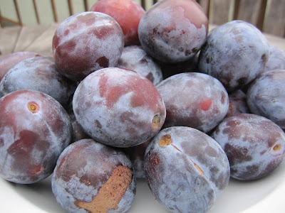 Italian prune recipes