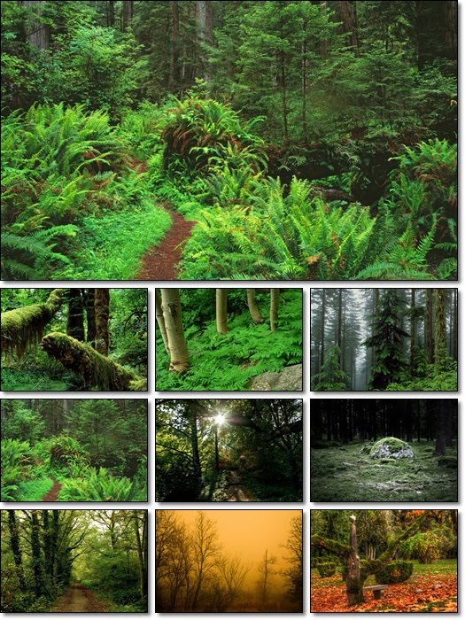 forest wallpaper. Forest Wallpapers Pack 2