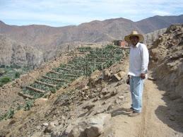 Cultivos en Andenes