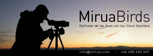 Miruabirds