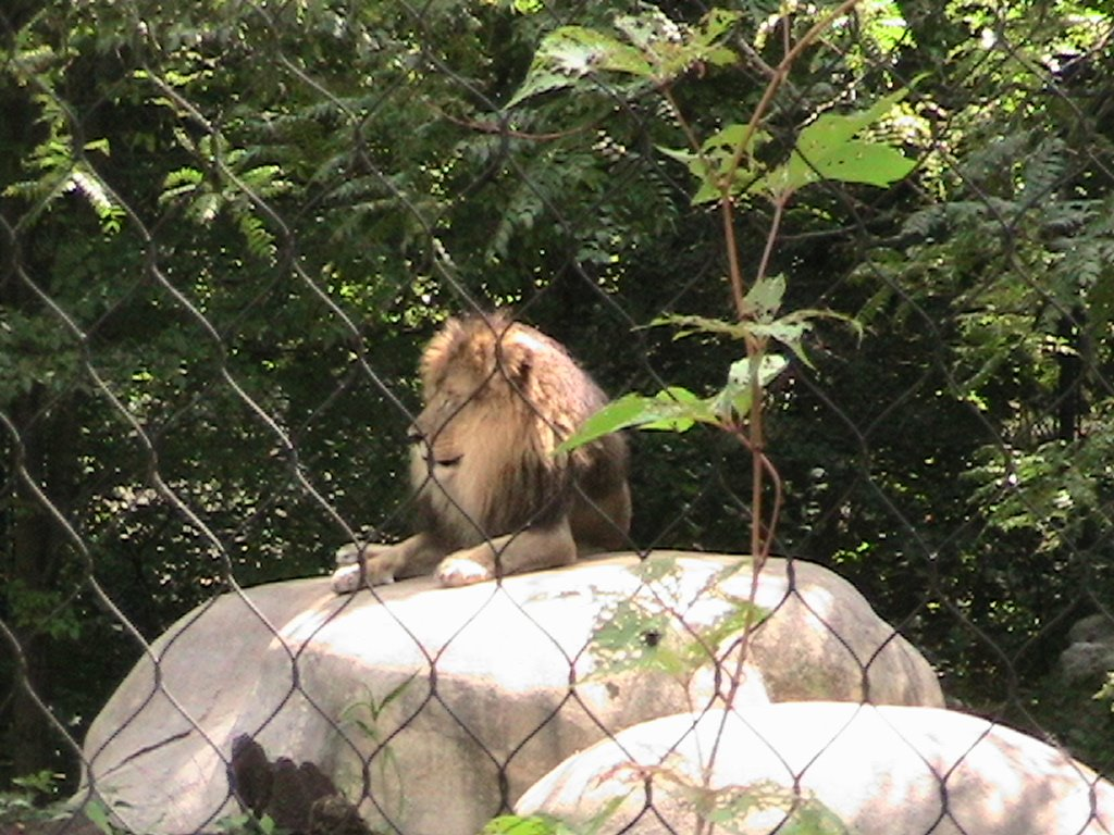 """For Your Reading: """"Thinking The Lions,"""" short story"""