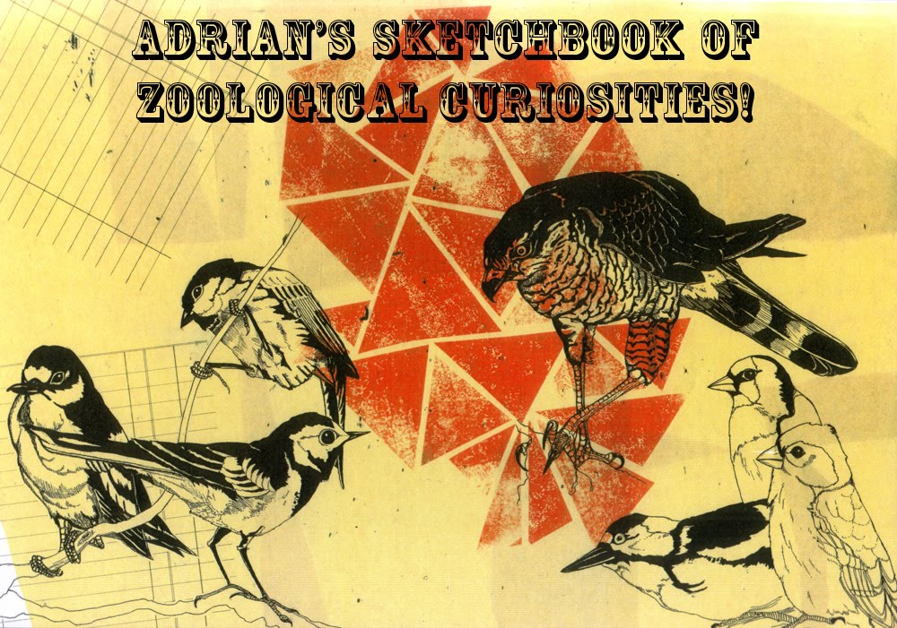 Adrian's Sketchbook of Zoological Curiosities!