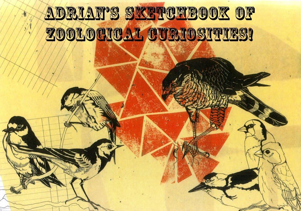 Adrian's Sketchbook of Zoological Curiosities!