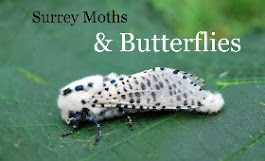 Click on the Leopard Moth to visit the Surrey Moths & Butterflies blog...
