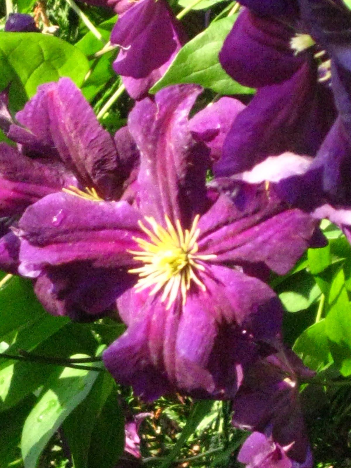 Blomsterbo: 2 dagar med trädgård för hela slanten!
