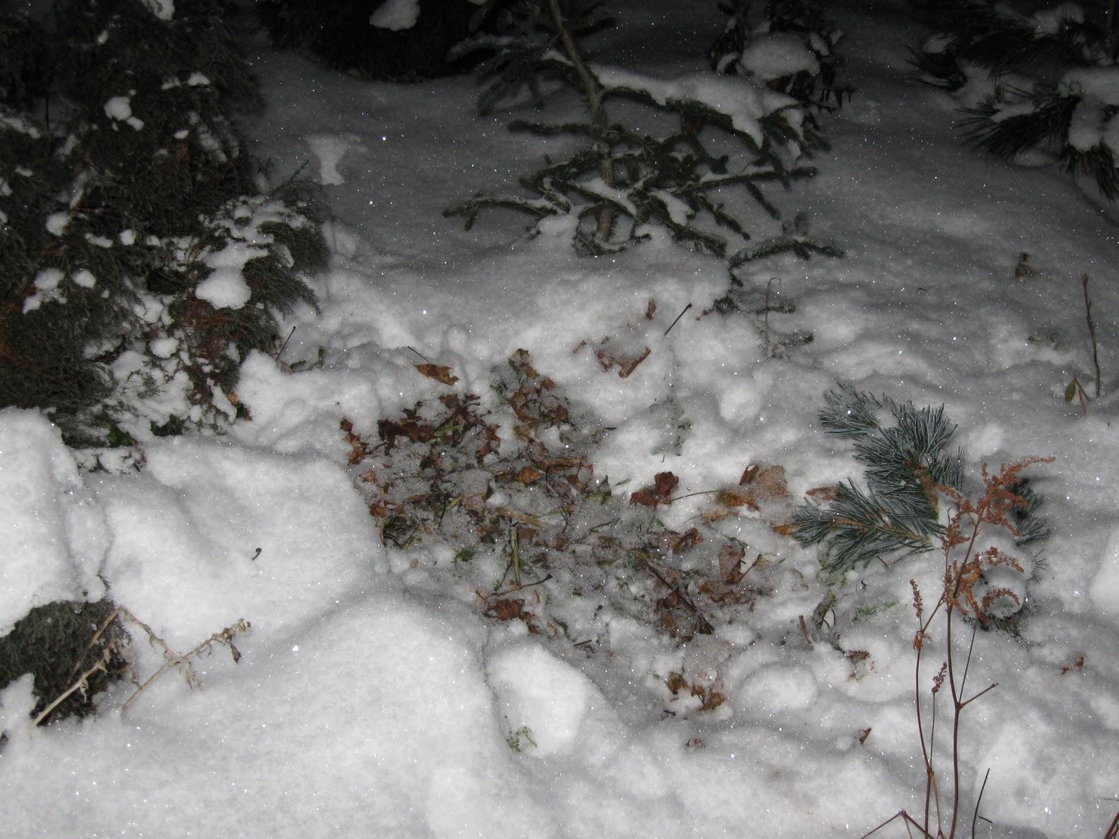 Blomsterbo: november 2010