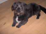 Billeder af vores hund Pelle