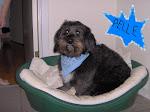 Vores hund Pelle